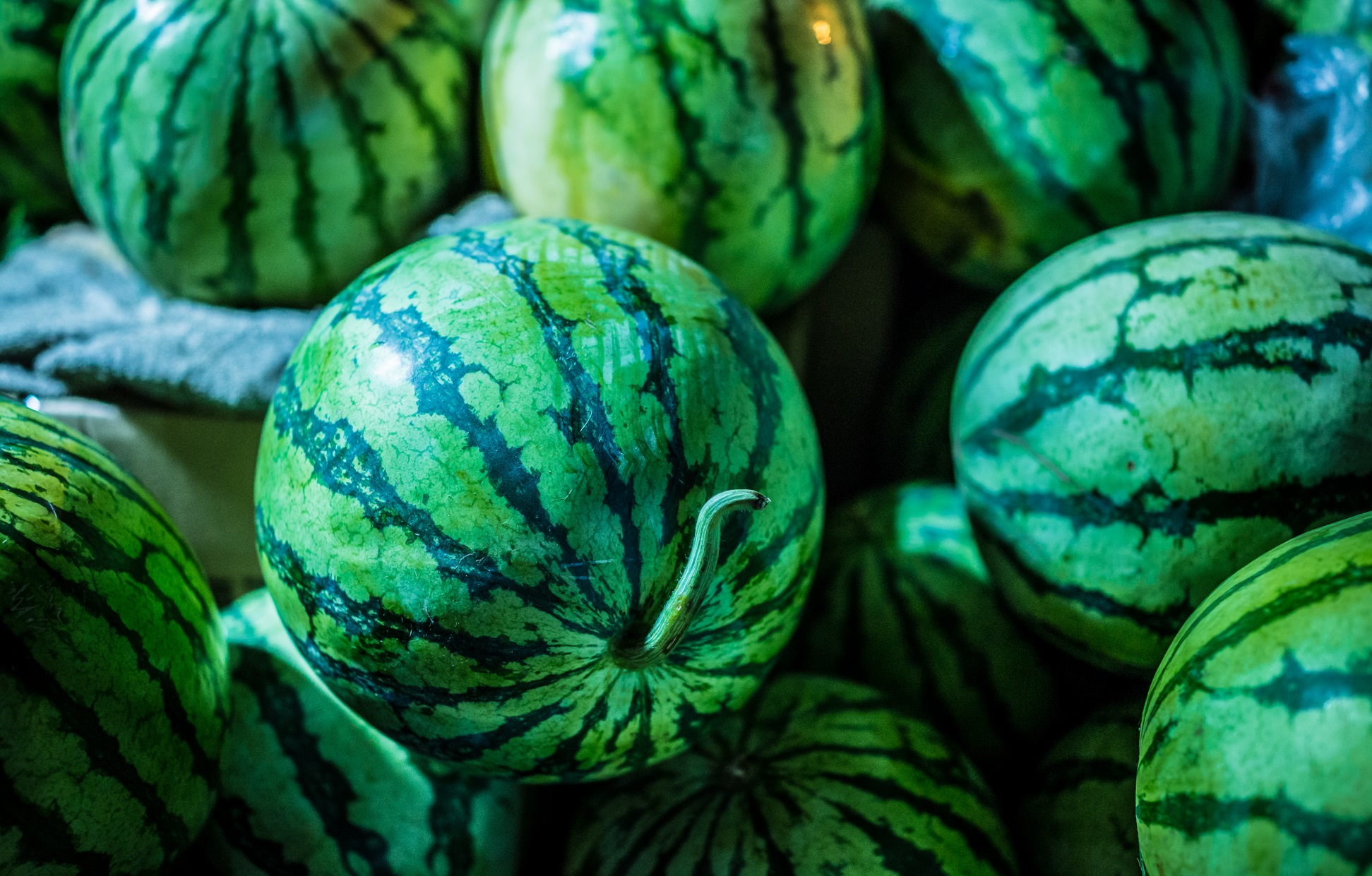 Watermelon Season Has Officially Started In Moscow