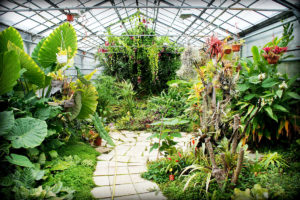 Greenhouse of Botanical Garden